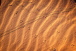 A multitude of tracks cover the beach at James Price Point.