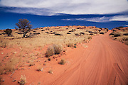 A track of orange sand leads towards the horizon in the Simpson Desert.