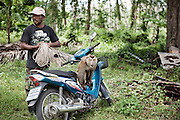 KOH SAMUI, THAILAND OCT 2013:<br />Luat, 40 years, a local farmer that use monkey to pick up coconut, he has two monkeys, Kaidam, 5 years and Kaideng 12 years.He trained his monkyes with mr Mard.<br />His Monkey can get a much as 500 coconut x day and his daily fee is between 1000 to 1500 Bath. &copy; Giulio Di Sturco