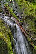 Cascade Creek in the Quinault Rainforest of Olympic National Park, Washington
