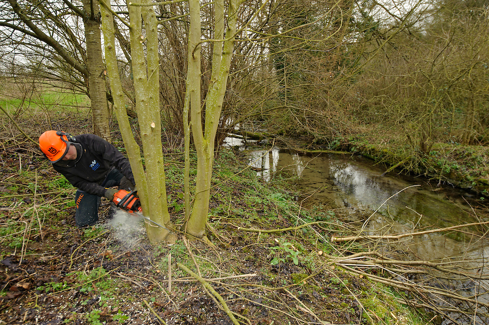 A team of staff and volunteers from The Wildwoood Trust improve water vole habitat on a stream in Kent by cutting trees to allow growth of bankside vegetation. Volunteer David Breakell.