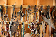 Tack room in a barn.  Horse saddles and harnesses.  Antique saddles.