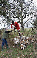 Fox Hunting.Binfield heath, Oxfordshire, England, February 7th, 2005 - Vale of Aylesbury with Garth and south hunt, Siniour joint Master Alan hill, on foot, jumping of gate to show the way to hounds.