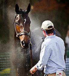 Horses are washed at the end of a race during the Eighteenth Running of the Charleston Cup Sunday, Nov. 13, 2011 at Stono Ferry in Hollywood. Paul Zoeller/Special to the Post and Courier