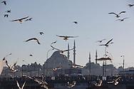 Turkey. Istambul. Yeni Camii mosque and seagulls