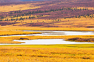 Fall colors on the tundra in the Maclaren River Valley in Interior Alaska.  Morning.
