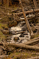 Fast running water. Rocky Mountain National Park. Image taken with a Nikon D2xs camera and 105 mm f/2.8 VR macro lens (ISO 100, 105 mm, f/2.8, 1/320 sec).