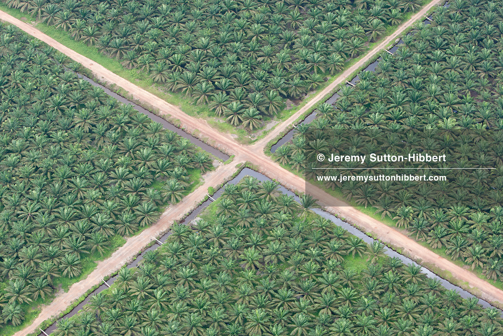 Sinar Mas-owned palm oil plantation, in southern Sumatra province, Indonesia, Saturday 16th October 2010.