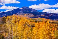 Fall color, Lone Cone Peak in background, near Telluride, Colorado USA.
