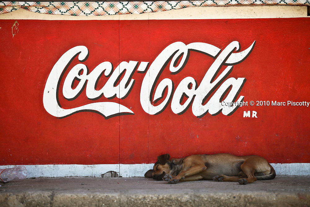 "SHOT 1/22/10 11:32:34 AM - A street dog sleeps under a Coca Cola sign in a street stall one afternoon in Sayulita, Mexico. Stray dogs can be a problem in some Mexican towns and cities but Sayulita has managed to spay and neuter a large number of the strays on the street keeping populations in check. Sayulita is a small fishing village about 25 miles north of downtown Puerto Vallarta in the state of Nayarit, Mexico, with a population of approximately 4,000. Known for its consistent river mouth surf break, roving surfers ""discovered"" Sayulita in the late 60's with the construction of Mexican Highway 200. In recent years, it has become increasingly popular as a holiday and vacation destination, especially with surfing enthusiasts and American and Canadian tourists. (Photo by Marc Piscotty / © 2009)"