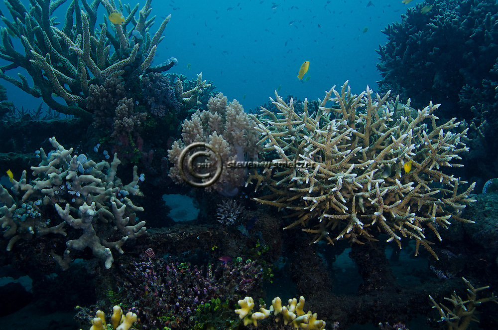 Coral Reef Project, Pemuteran Bay, Bali Indonesia