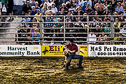Steer wrestling event at the rodeo, Cowtown, New Jersey, USA