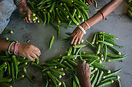 Okra bought from producer group farmers are graded and packed by workers at the collection centre in Machahi village, Muzaffarpur, Bihar, India on October 27th, 2016. Non-profit organisation Technoserve works with women vegetable farmers in Muzaffarpur, providing technical support in forward linkage, streamlining their business models and linking them directly to an international market through Electronic Trading Platforms. Photograph by Suzanne Lee for Technoserve
