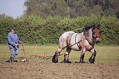 Trekpaarden 2011