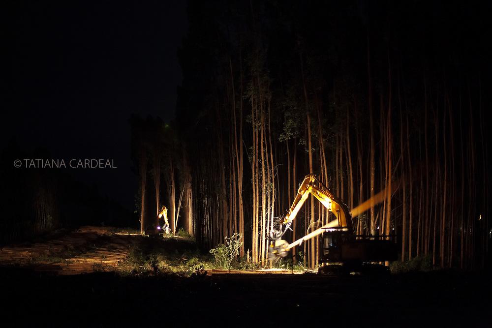 Cut of Eucalyptus in Teixeira de Freitas city, Bahia State - Brazil. Machines operate 24 hours a day.<br /> <br /> Corte de eucaliptos em Teixeira de Freitas (BA). M&aacute;quinas operam 24 horas por dia.