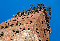 LUCCA ITALY - CIRCA MAY 2015:  View of the Guinigi Tower in the walled city of Lucca, a popular tourist destination in Tuscany.