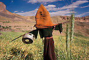 Scarecrow with Tibetan monk's hat, large bee. Ladakh, India
