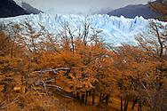 Glacier Perito Moreno, Ventisquero, Parque Nacional Los Glaciares, El Calafate, Santa Cruz, Patagonia, Argentina