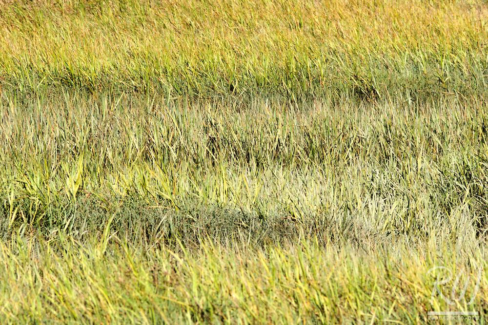 Wetlands Grasses, Mill Valley, California