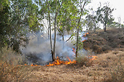 Yet another fire caused by Palestinian Kite bombs that were flown from Gaza with a lit petrol soaked cloth, to set fires to Israeli fields and crops. Photographed on May 25, 2018 on the Israel Palestine (Gaza) Border