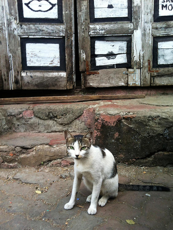 Stray Cat in India