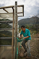 Hernei Ruiz has grown coca all his life. He now promotes the traditional use of coca. He prefers drying coca leaves in the sun but when it starts raining he has a covered dryer. He lives in Lerma, a small coca producing community in the south of Cauca department. The region is controlled by the ELN guerrilla group. There's no official authority in town.