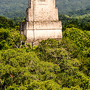 View of the Tikal Maya Ruins and the jungle canopy from the top of Temple IV, the tallest of several pyramids at the site. In the frame is the top of Temple 3 (Temple of the Jaguar Priest). From this vantage point, one can watch and hear howler monkeys, spider monkeys, and many birds moving through the treetops.