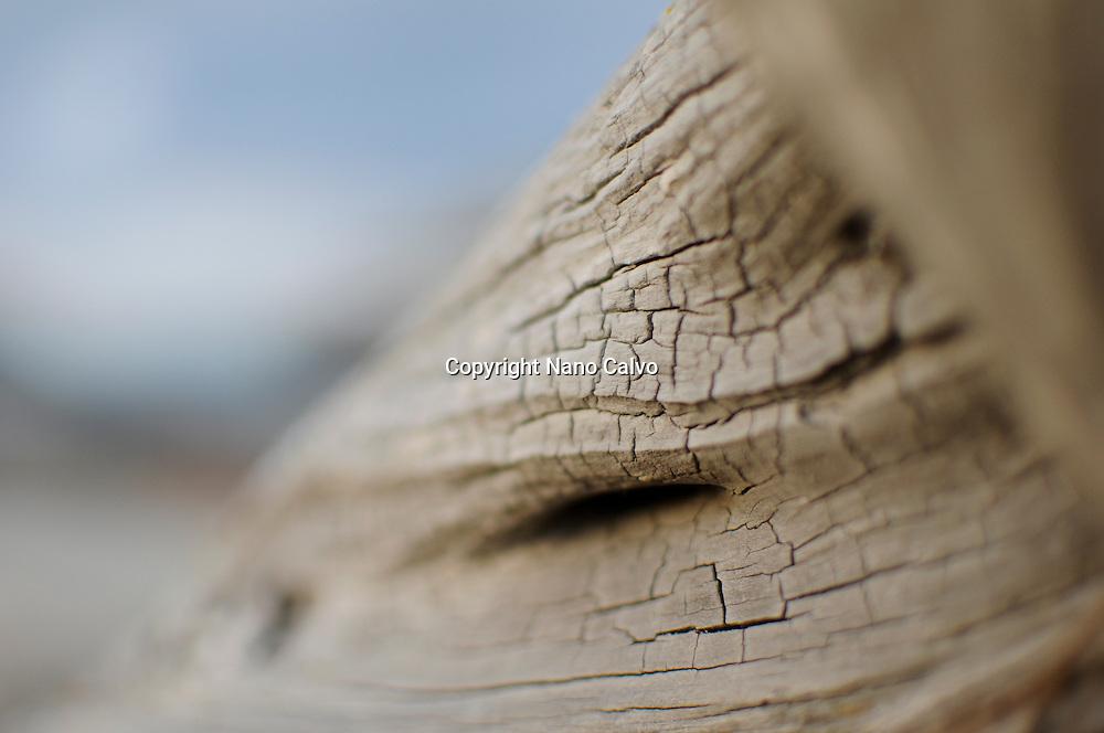 Detail of a Sabina Centenaria´s log, Ibiza, Spain