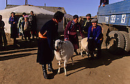 Mongolia. traditional weding  in  Atar  little village in the steppe . a sheep is given as a gift.      /  mariage traditionnel  a Atar petit village perdu dans la steppe , un mouton est donné en cadeau./  P0009415  b