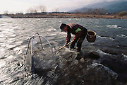 Licensed zaza-mushi fisherman Kazumi Nakamura nets the larvae of the aquatic caddis fly which he later cooks by boiling, cleaning, and sautéing with soy sauce and sugar; the zaza-mushi are at the peak of their culinary quality when harvested from the coldest waters of the Tenru River in December and January, Ina City, Japan. Image from the book project Man Eating Bugs: The Art and Science of Eating Insects.