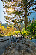 Lundy Canyon Scenic View