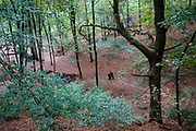 Een stel loopt in het bos bij Berg en Dal.<br /> <br /> A couple walks in the woods near Berg en Dal.