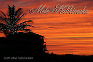 Silhouette of palm tree at twilight, Kapalua, Maui, Hawaii, Mele Kalikimaka, Merry Christmas