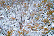 63877-00811 Trees with a dusting of snow aerial view Marion Co. IL