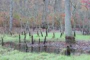Vernal Pool - Delmarva Bay; seasonal wetland; DE, New Castle Co., Blackbird State Forest