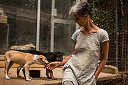 EVA RUPPEL sits with two rescued puppies at her rural property near Kandy, Sri Lanka, on Wednesday, February 21, 2018. Ruppel does not cage the approximate 170 rescued dogs living with her, allowing them freedom to roam and interact in small packs in multiple pens throughout her property, as well as inside her home. Ruppel created Tikiri Trust, with the financial assistance of her father, to rescue and rehome Sri Lanka's street dogs.<br /> <br /> <br /> It is impossible to visit Sri Lanka without seeing street dogs in nearly every public space, near hotels, guest houses and restaurants, schools, offices, markets, hospitals, police stations, bus terminals, railway stations, temples, etc. These dogs do not have their own homes, but they are usually highly tolerated and are typically fed collectively by people in a particular area.<br /> <br /> According to the NGO, Kandy Association for Community Protection through Animal Welfare (KACPAW), 100 unsterilized dogs will give rise to 3,000 dogs in one year. The Sri Lankan government, as well as several NGOs, work to spay/neuter animals, but there is need to educate the public and maintain funds to stay on top of their efforts.<br /> <br /> Eva Ruppel left Germany for a three-month visit to Sri Lanka, which included time in a Buddhist meditation retreat, and she remains in this island nation 37 years later.<br /> <br /> While married, Ruppel&rsquo;s husband asked that the couple keep only three dogs in their home at any one time, and she respected his wishes. This 60-something year old lost her husband to a ruptured brain blood vessel in 1995 when he was 51 years old, after nine years of marriage. After his death, she began rescuing more and more animals and she now lives with 170 dogs, plus a dozen or so cats.<br /> <br /> With the support of her father, she started Tikiri Trust. Her father passed away in 2011, and he left her an inheritance, which she continues to use to support her cause. <br /> <br /> Ruppel, who is fluent in German, English and Sinhala, said that she has found homes for &ldquo;hundreds,