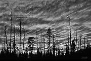 Clouds resembling the flames of a raging wildfire light the evening sky over an area of forest partially burned by the Steamboat Fire in Yosemite National Park, California.  The Steamboat fire started on August 7, 1990 and eventually destroyed 6,106 acres of woodland. Wildfires have historically been considered disasters, but it is now understood that fire is an integral component of forest life.  Naturally occurring fires thin the woodlands, increase sunlight to the forest floor, and allow for recycling of nutrients to the soil.  Thus, wildfires actually encourage the germination and regrowth of the forest plants and trees.