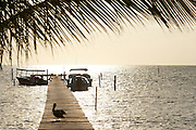 Belize, Central America - Sunrise and a Pelican on one of the many private, wooden piers on the Caye Caulker waterfront.