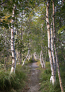 Hemlock Road in Sieur De Mont Springs is one of the most beautiful locations in Acadia. White birches line a path and make for a lovely photo op.