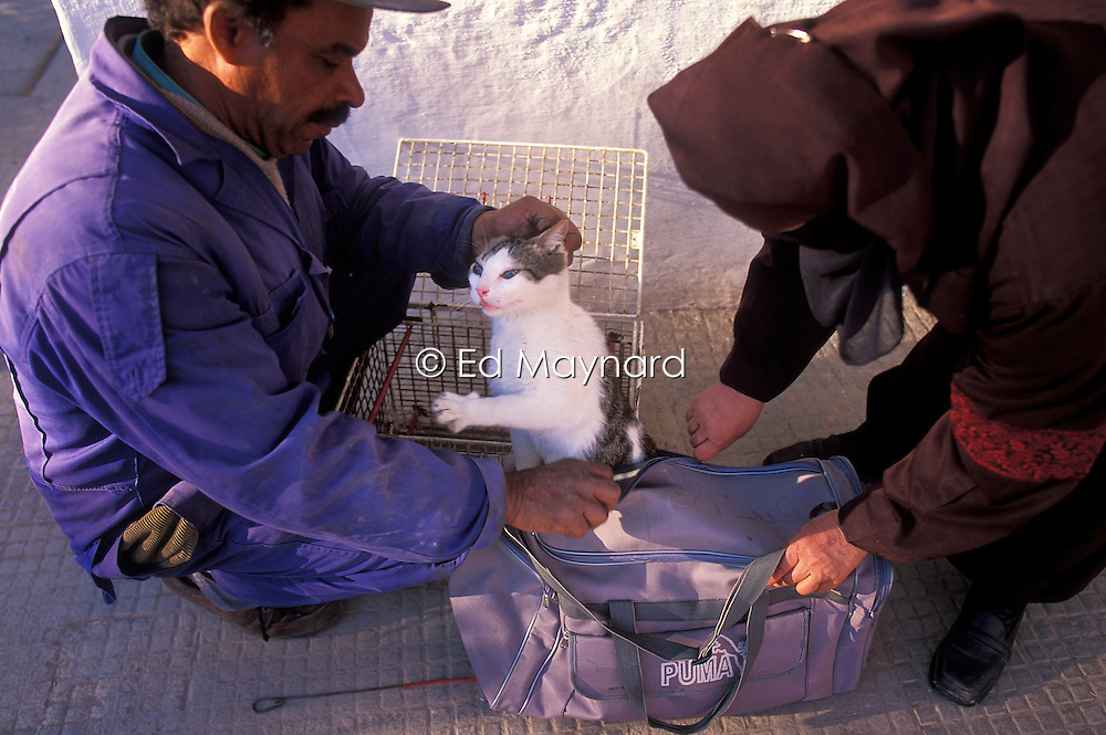 Woman brings her cat in a holdall for a check by vets at the SPANA refuge, Marrakech, Morocco.