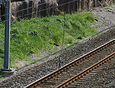 Auckland-Second break in commuter rail overhead cable
