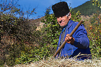 Farmer sitting on a horse carriage loaded with hay in the village of Isverna. Geoparcul Platoul Mehedinți, Romania.