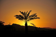 Silhouette of a Palm tree at sunset Photographed at Faran in the Arava desert, Israel