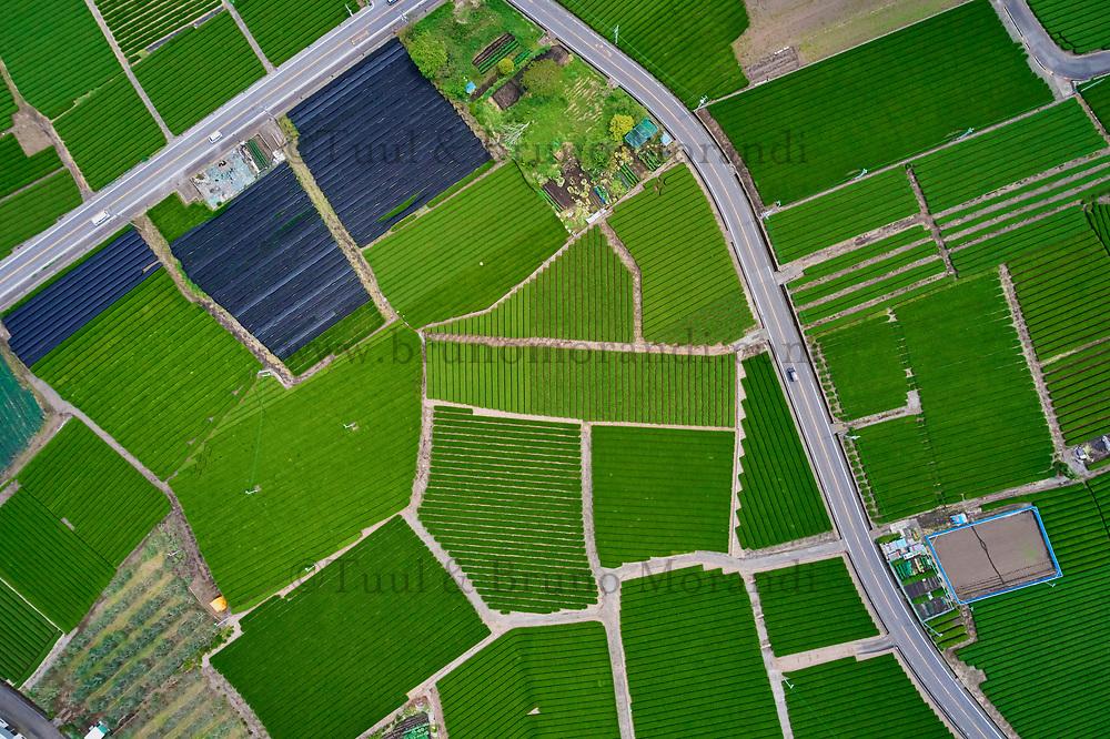 Japon, île de Honshu, région de Shizuoka, champs de thé et le mont Fuji // Japan, Honshu, Shizuoka, tea fields and Mount Fuji