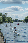 "Maidenhead, United Kingdom.  ""Singles"", approaching the ""Finsh Line"". ""Thames Punting Club Regatta"", Bray Reach.<br />
