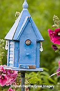 1324-01410 House Wren (Troglodytes aedon) at blue nest box near Hollyhocks (Alcea rosea) Marion Co. ,  IL
