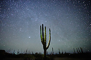 A cardón cactus stands beneath a star filled sky near La Paz, Baja California Sur, Mexico.