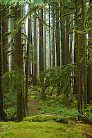 Ancient Groves Trail, Sol Duc River, Olympic National Park, WA