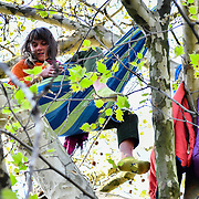 Activists climb up a tree to protest on Day 5 - XRExtinction Occupy Parliament in demand the UK Govt to act of Climate Change by 2025 on 19 April 2019 at Parliament square, London, UK.