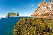 Image photographed at the Poor Knights Islands, New Zealand, Pacific Ocean.